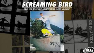 rs-screaming-bird-release-image-dlxslider